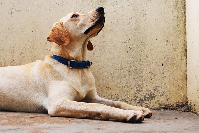 The Best Dog Breeds For Children With Autism