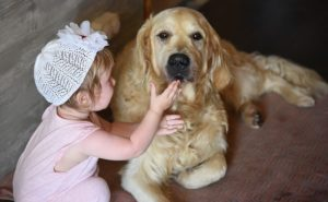 The Finest Canine Breeds For Kids With Autism