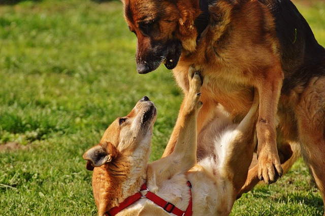 Why Do Female Dogs Hump-9265