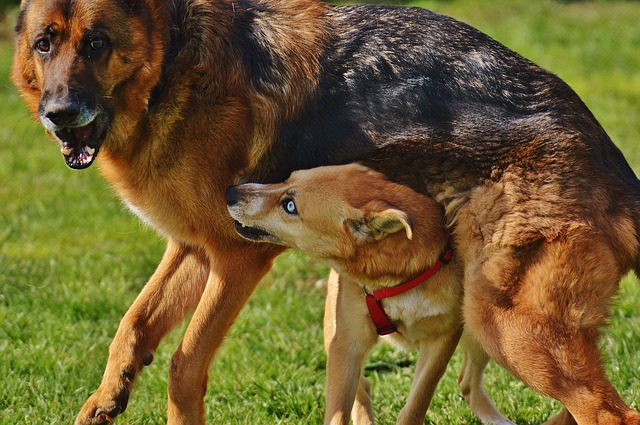 Why Do Female Dogs Hump-4820