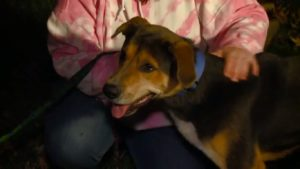 Canine Drags Baby Into Kitchen, Then Minutes Later, Mother Sees Why
