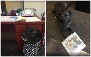 Proficient Canine Tries A number of Careers Till His True Present Actually Shines Via