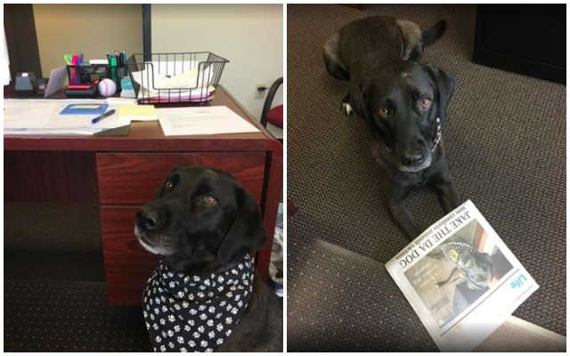 Talented Dog Tries Multiple Careers Until His True Gift Really Shines Through