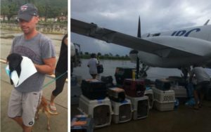 Kenny Chesney Helps Rescue 100 Canines From Hurricane-Ravaged Virgin Islands
