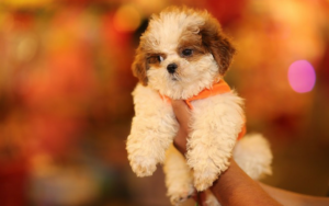 5 Widespread Errors New Pet House owners Make