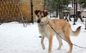 New Regulation Limits Canine Tethering To 30 Minutes In Freezing Temperatures