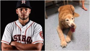 Houston Astros Pitcher Makes use of His Twitter To Reunite Misplaced Senior Canine With Household