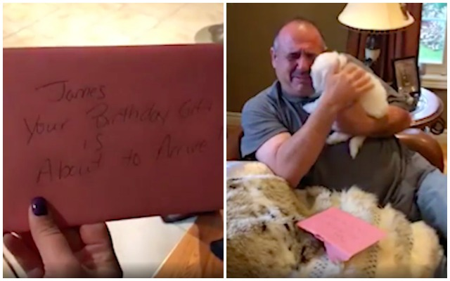 Man Gets The Ultimate Surprise After Weeks Of Grieving The Loss Of His Dogs