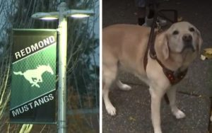 Faculty District Suspends Mother From Appearing As Son's Service Canine Handler