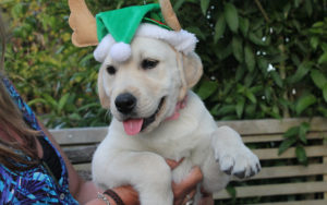 Shelter Makes Controversial Choice To Halt Adoptions Till After The Holidays