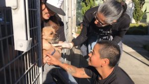 1,000 L.A. Shelter Pets Obtain A Particular Vacation Shock