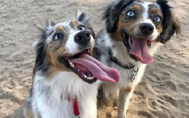 Blind Dog Learns To Face Her Fears Thanks To Her Special Needs Sister