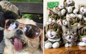 The 10 Most Well-known Instagram Pets Of 2017