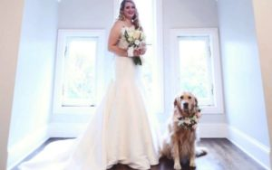 Golden Retriever Serves As Flower Lady At Her Pawrents' Marriage ceremony