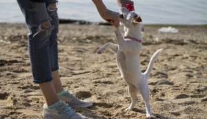 Do Canines Play Favorites When It Comes To Their People?