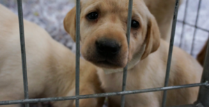 New Laws Hopes To Crack Down On Pet Mills