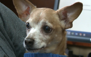 Man Desires To Re-Undertake Surrendered Canine After Donors Paid For His Care