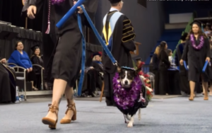 School Grad Receives Diploma Alongside Service Canine Who Made It All Doable
