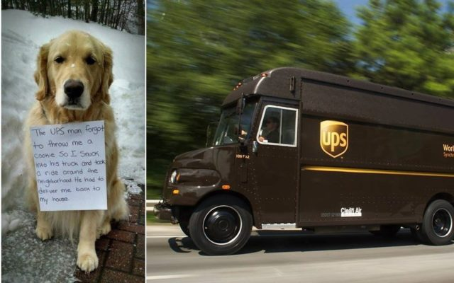 Dog Stows Away On Ups Truck After Driver Fails To Give Him