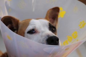 Pet Insurance coverage: Right here's What Each Canine Proprietor Ought to Know