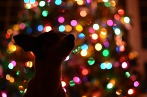 How Do I Preserve My Canine From Peeing On The Christmas Tree?