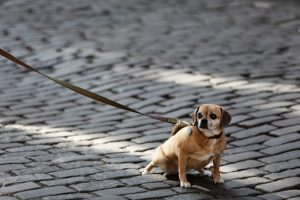 three Easy Ideas To Cease Your Canine From Pulling On Leash