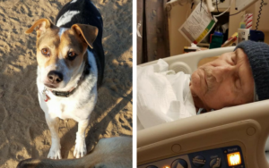 A Dying Man's Final Want Is To Discover A Dwelling For His Beloved Senior Canine