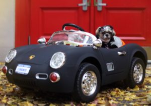 Canine Loves To Cruise In His Luxurious Vehicles