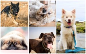 5 Paw-fect Items For Each Canine Character