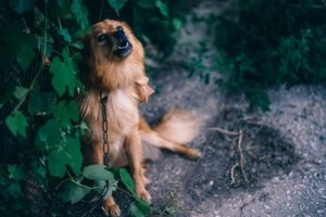How To Assist Your Canine Get well From Previous Trauma