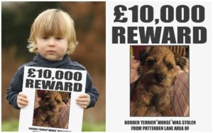 Simon Cowell Presents £10,000 Reward To Reunite Boy With His Stolen Canine