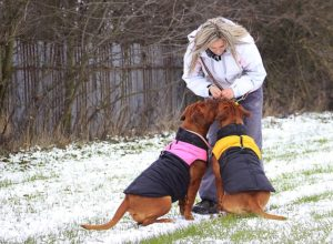 Ask A Vet: Ought to My Canine Put on A Coat In Winter?