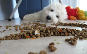5 Unusual Consuming Habits And What They Imply About Your Canine