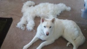 7 Causes Why You Ought to Brush Your Canine's Coat On A Common Foundation