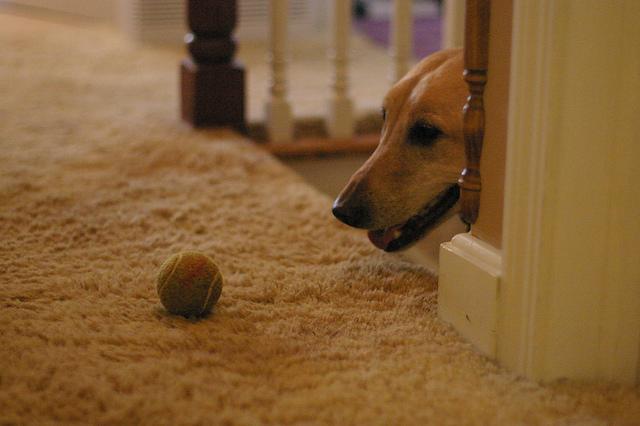 4 razones por las que los perros tienen miedo a las - Escaleras para perros pequenos ...