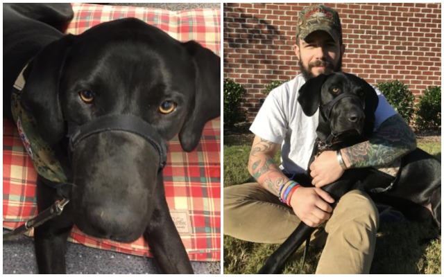 How Your Purchases Helped Two Lives: A Deserving Veteran & A Rescue Service Dog