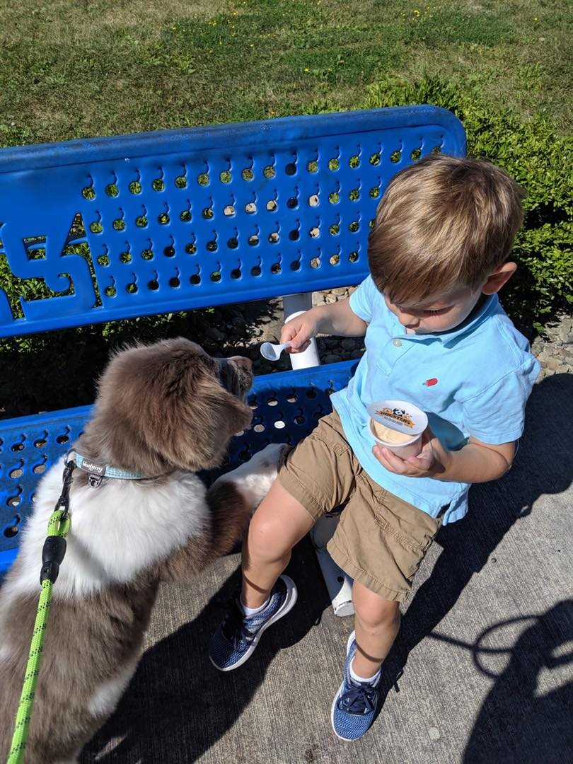 Handels-dog-ice-cream