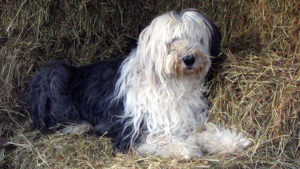 Selecting The Greatest Joint Complement for a Outdated English Sheepdog – 6 Issues You Should Know