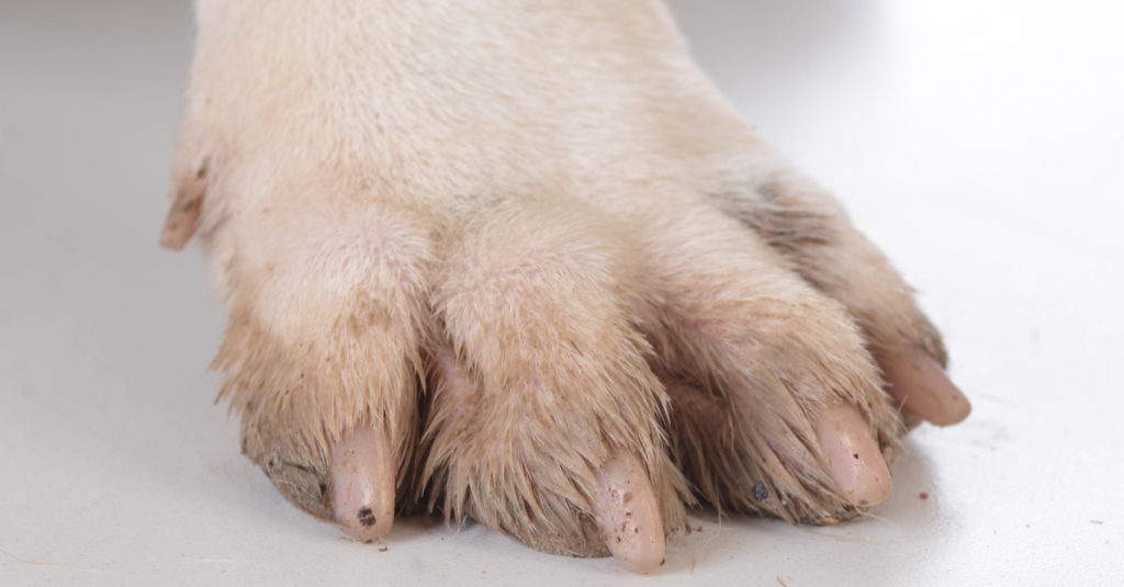 Why Omega 3 Can Help A Dog Who Is Constantly Biting Their Paws