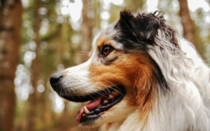 Astaxanthin For Canines: The Powerhouse Tremendous-Nutrient Everybody's Speaking About