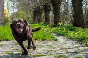Why Does My Canine At all times Strive To Run Away From Dwelling?