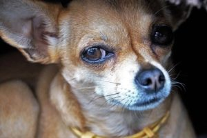 5 Sudden Causes Why Canines Don't Like Sure Folks
