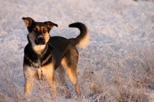 Canine Left Out In Freezing Chilly Spark Outrage Over Lack Of Animal Security Legal guidelines