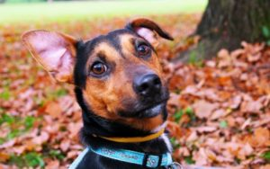 eight Foolproof Steps To Forestall Ear Infections In Canine