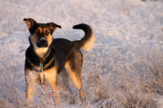 Dogs Left Out In Freezing Cold Spark Outrage Over Lack Of Animal Safety Laws