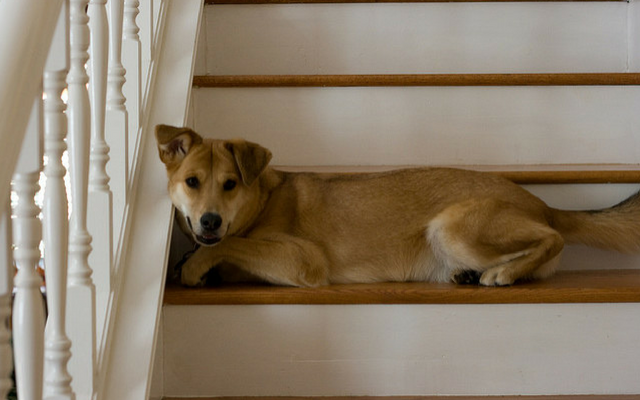 4 Reasons Dogs Are Afraid Of Stairs And How To Help Them