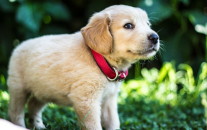 Do Puppies Actually Want Particular Pet Meals?