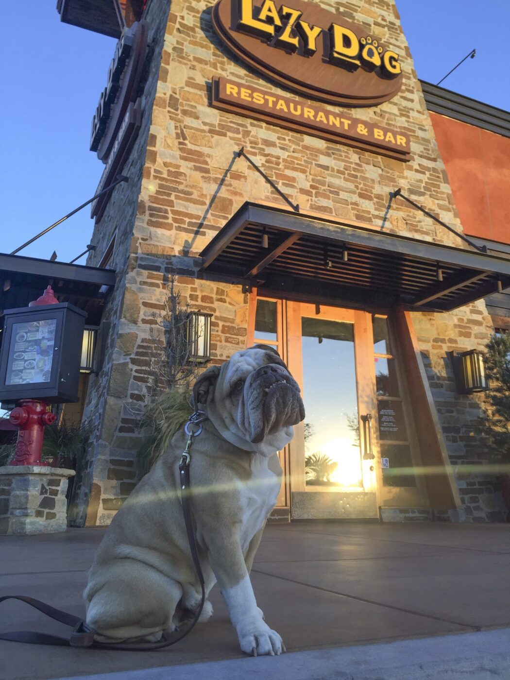 restaurant-with-dog-menu