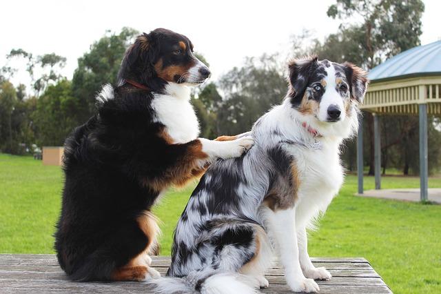 dog massaging other dog's stiff joints
