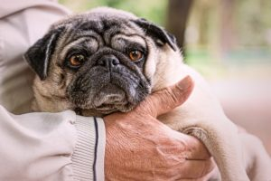 If You've Observed Your Canine Limping or Stiffness In Your Canine, Do These Three Issues Instantly